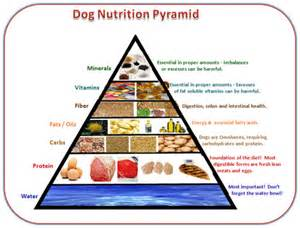 Dog Nutrition Food Chart