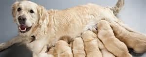 Mother Dog Nursing Puppies
