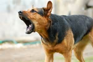 Picture of a Dog Barking