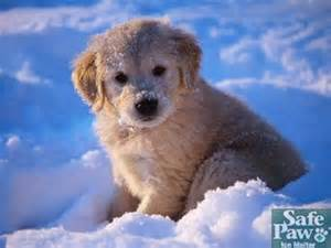 Safe Paw Snow Dog