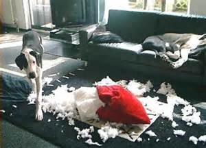 Dog Chewing Up Couch