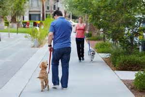 Walking Dog Using A Leash