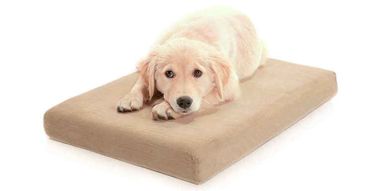 Dog Luxury Beds