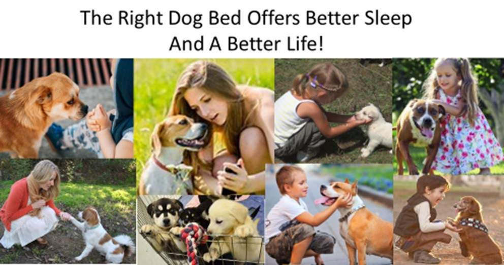 Dog Luxury Beds Dogs The Right Dog Bed Offers Better Sleep And A Better Life