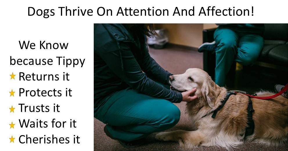Dog Luxury Beds Dogs Thrive on Affection and love attention