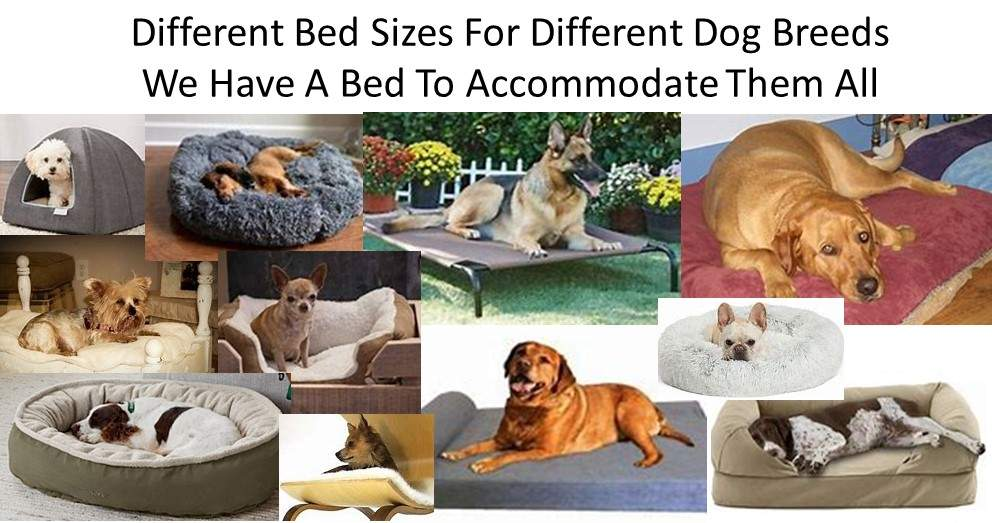 Dog Luxury Beds Have Different Bed Sizes For Different Dog Breeds; Therefore They Need Different Types Of Beds