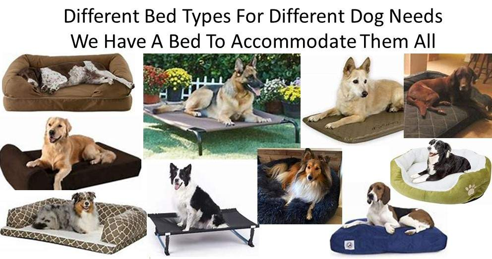 Dog Luxury Beds Dogs Have Different Needs; Therefore They Need Different Types Of Beds