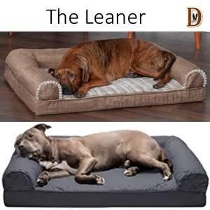 Dog Sleeping position The Leaner