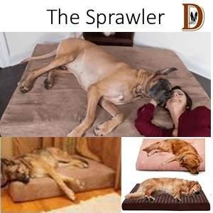 Dog Sleeping position The Sprawler