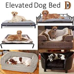 How To Buy A Dog Bed Elevated Dog Bed Type