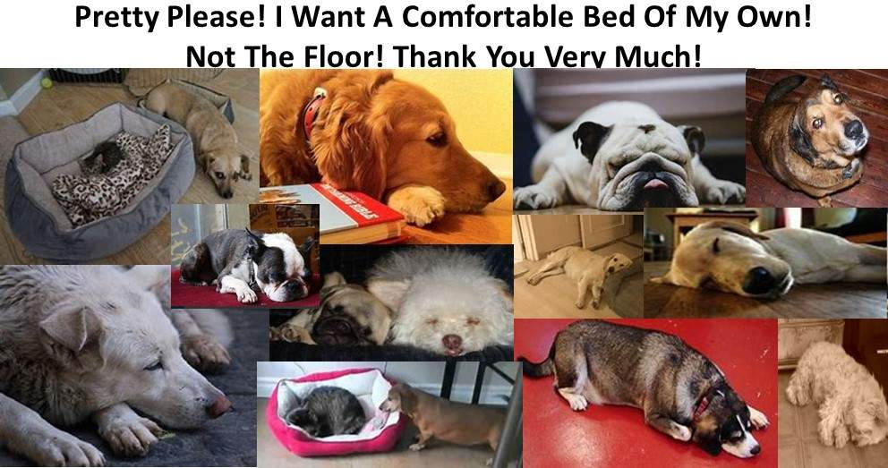 How To Buy A Dog Bed. Pretty Please! I want A Comfortable Bed Of My Own Not The Floor. Thank You Very Much!