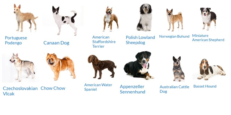 Medium Size Dog Breed Pictures