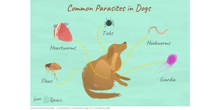 Common Parasites In Dogs Header